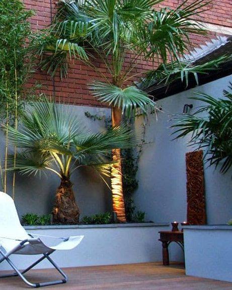 Tropical corner in a small garden