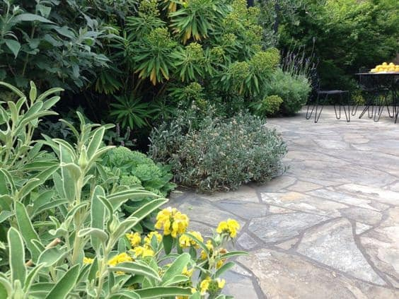 Stone flooring and tropical plants