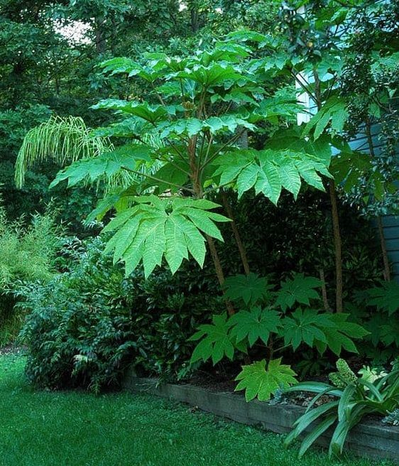 Large leaf tropical plants in a tropical garden