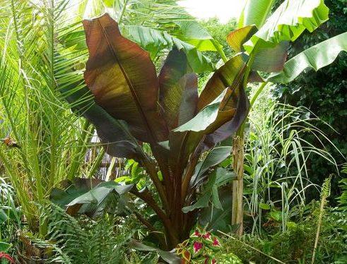 Deep jungle plants that give off a more exotic backyard/jungle vibe