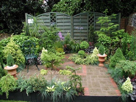 Jungle plants and privacy fence