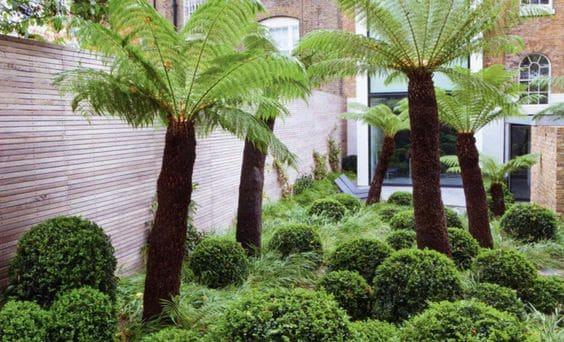 Tree ferns and timber slatting