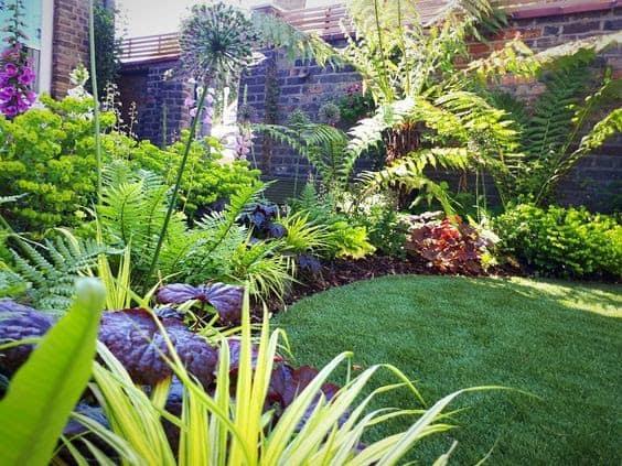 South-facing jungle garden