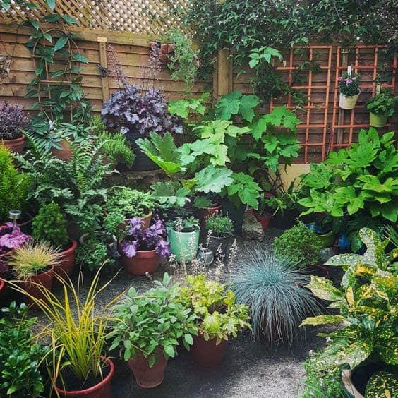 A simple tropical garden with some trellis, climbing plants and flowers