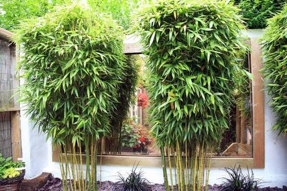 Bamboo plants and mirror