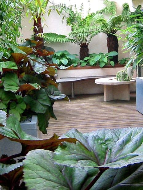 Modern looking deck and jungle plants