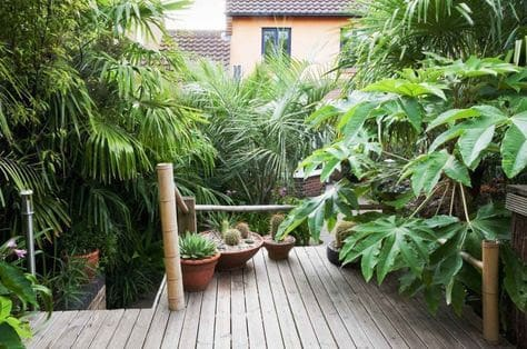 Tropical plants in a tropical-themed backyard