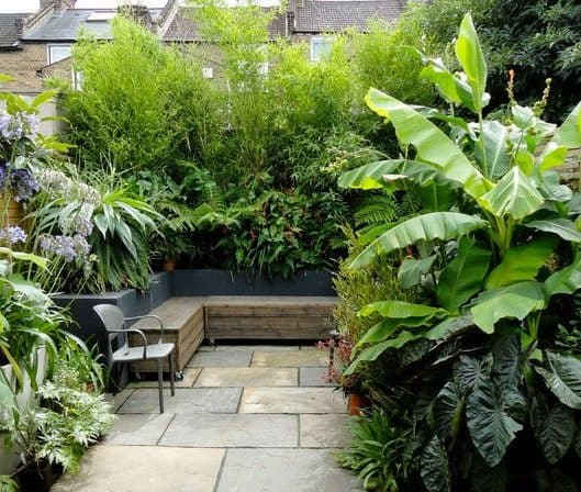 A small garden filled with lush, green plants