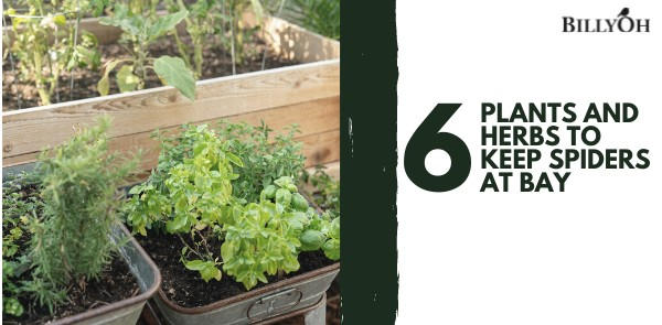 6 Plants and Herbs To Keep Spiders At Bay