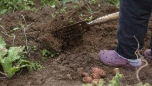 A Beginners Guide to Starting an Allotment