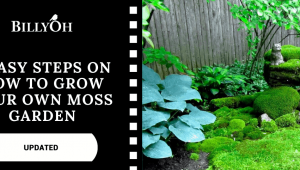 How to Grow Your Own Moss Garden In 5 Easy Steps