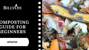Composting Guide for Beginners (Updated 2021)