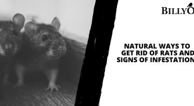 Environmental Health: 8 Natural Ways to Get Rid of Rats
