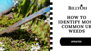How to Identify Most Common UK Weeds (And Save Your Garden!)